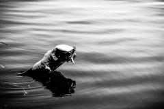 sø stemning