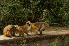 Monkey_business-web1080